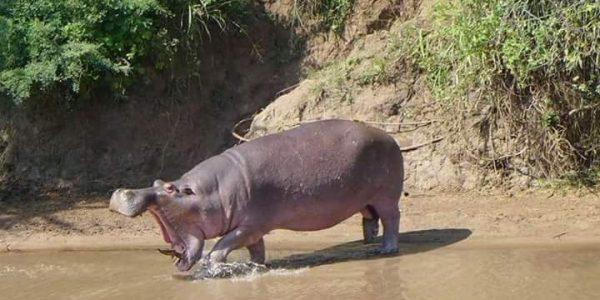 2 Days Murchison Falls safari Falls Uganda - Wild Jungle Trails Safaris Uganda