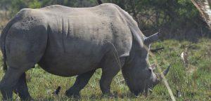 3 Days Murchison Falls Wildlife Safari Uganda - Wild Jungle Trails Uganda Safaris