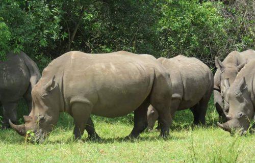 3 Days Murchison Falls safari Uganda - Wild Jungle Trails Safaris Uganda