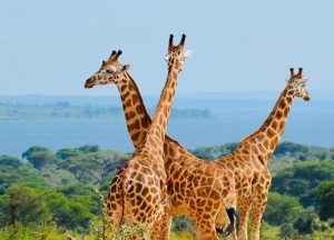Murchison Falls National Park - Wild Jungle Trails Safaris Uganda