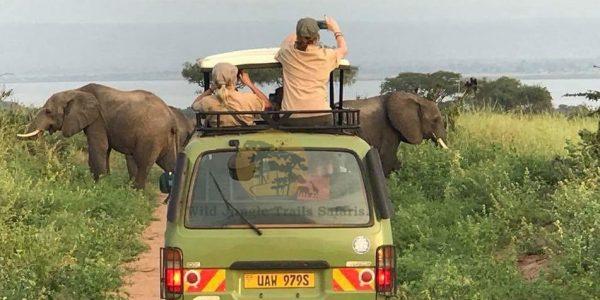 3 Day Murchison Falls tour from Kampala - Wild Jungle Trails Safaris