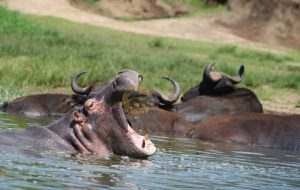 3 Days Murchison Falls Safari - Wild Jungle Trails Safaris