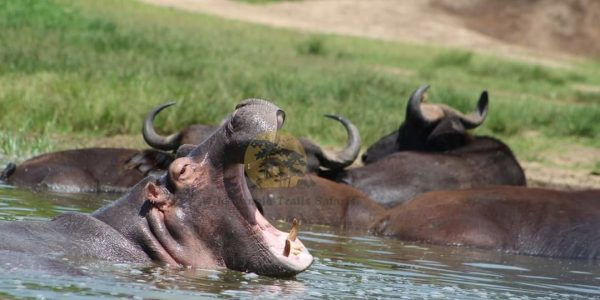 3 Days Murchison Falls Safari - Wild Jungle Trails Safaris