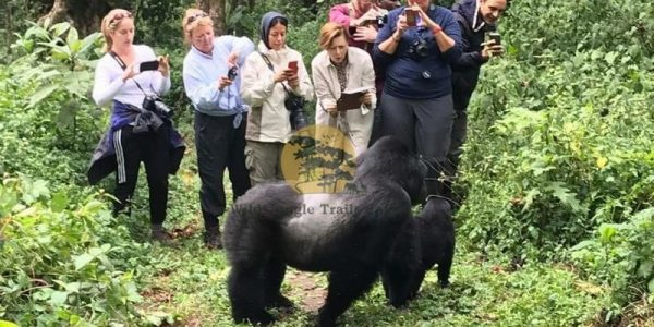 5 Days Gorilla and White water rafting Safari Uganda - Wild Jungle Trails Safaris