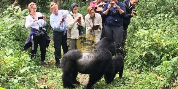 5 Days Gorilla and White water rafting Safari Uganda - Wild Jungle Trails Safaris