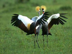 Bird species in Uganda - Wild Jungle Trails Uganda