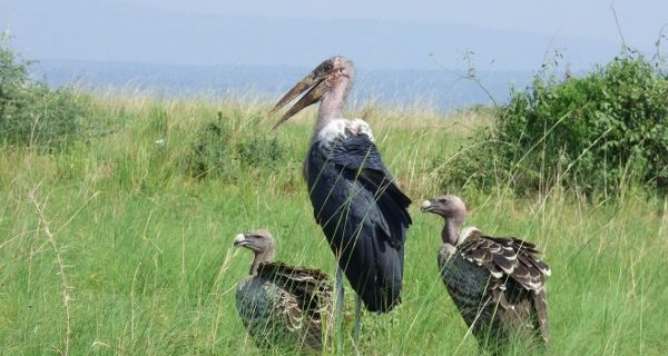 Bird watching in Murchison Falls National Park - Wild Jungle Trails Safaris