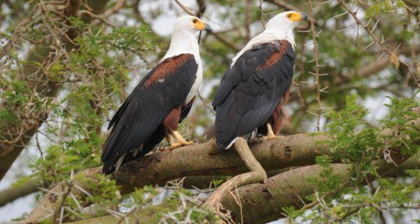 Birding in Queen Elizabeth National Park - Wild Jungle Trails Safaris