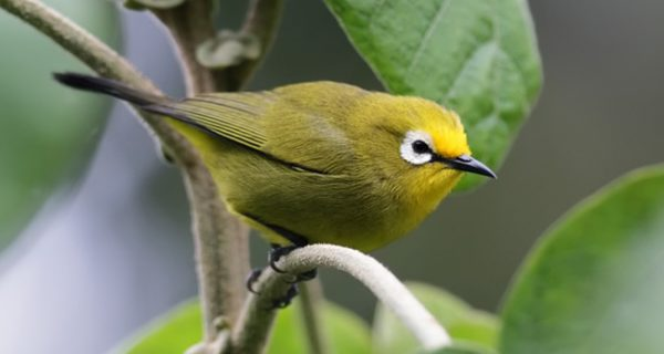 Birds in Mount Elgon National Park