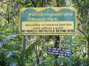 Bwindi Impenetrable National Park - Wild Jungle Trails Safaris.jpg