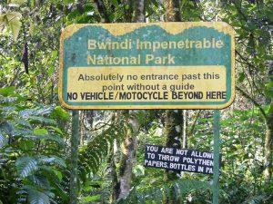 Bwindi Impenetrable National Park - Wild Jungle Trails Safaris.jpg
