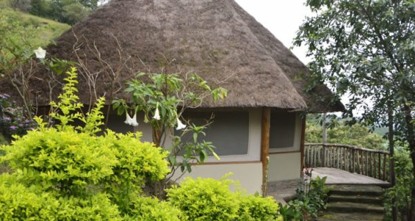 Enganzi Lodge in Queen Elizabeth National Park - Wild Jungle Trails Safaris