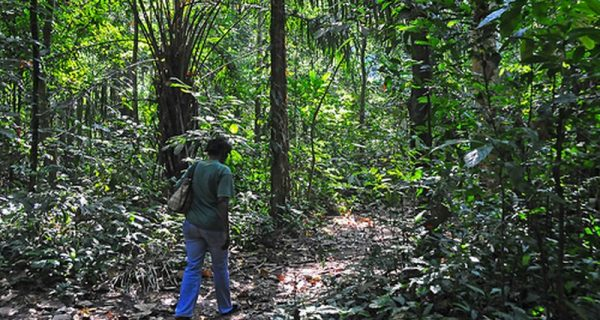 Forest walks and nature walks in semuliki