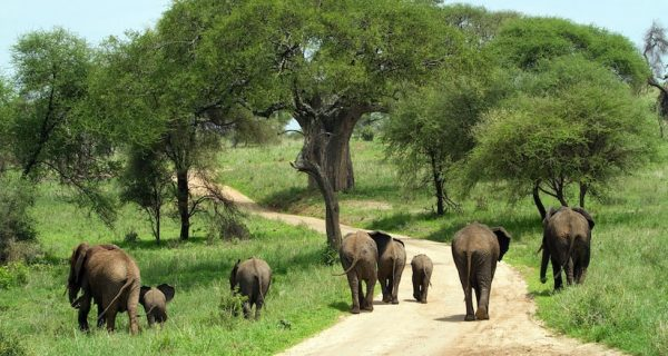 Game drives wildlife viewing in Kidepo