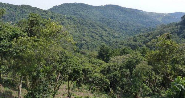 Gishwati Mukura National Park Rwanda