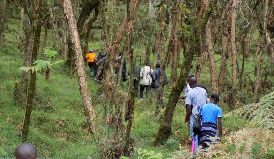 Hiking and nature walks in Mgahinga Gorilla National Park