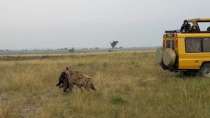 Morning game drive in Queen Elizabeth National Park, 9 Days Uganda chimpanzee trekking and Primate Safari
