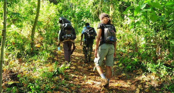 Nature Walks and day hikes in Mount Elgon National Park