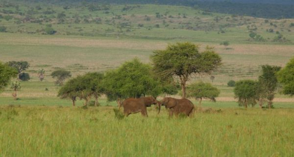Nature walks in Kidepo Valley National Park