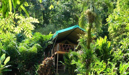 Rafiki Lodge