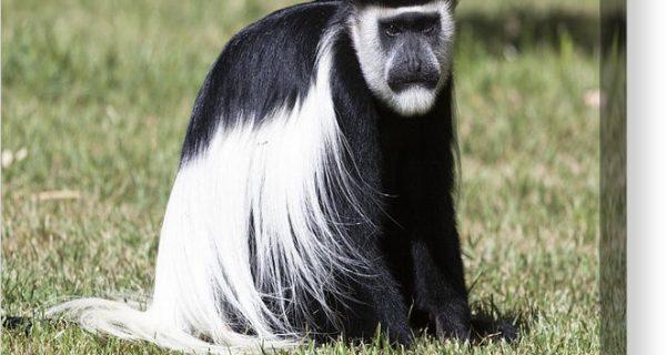 Wildlife in Mount Elgon National Park