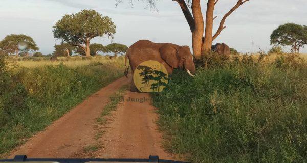 Wildlife in Queen Elizabeth National Park