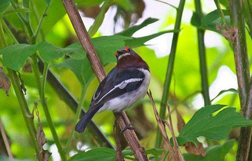 birding in Bwindi Impenetrable National Park