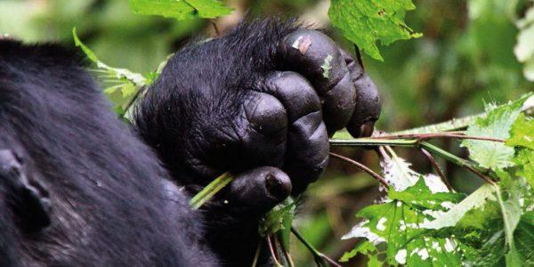 14 Days Rwanda tour and Uganda gorilla safari