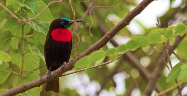 Bird of Akagera National Park