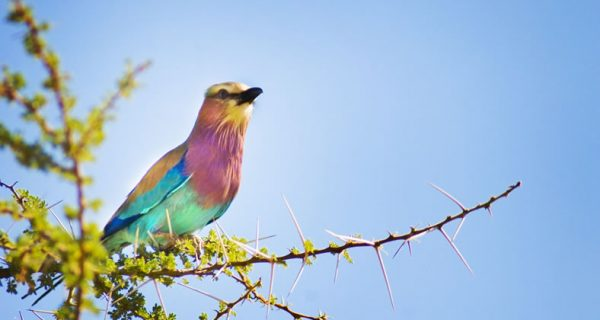 Birding in Kenya safaris