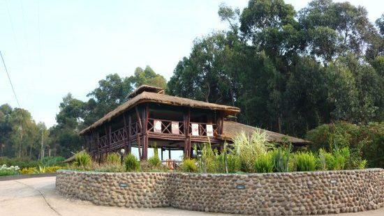 Da Vinci Gorilla Lodge rwanda