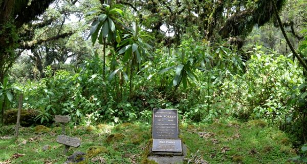 Hiking to Dian Fossey grave