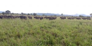 Kidepo Valley National Park travel information