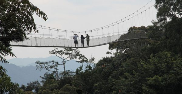 Nyungwe canopy walk in Nyungwe forest