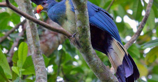 birding trekking rwanda tours