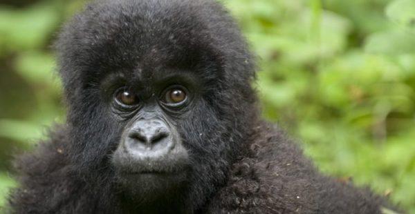 short rwanda safaris