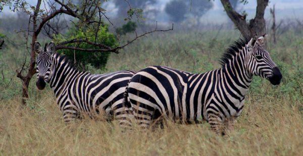 wildlife trekking rwanda