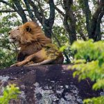 Cheap Safaris in Uganda