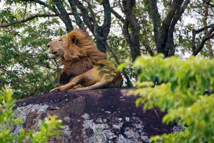 Cheap Safaris in Uganda