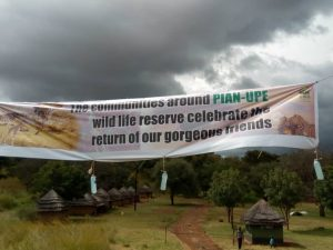 Pian Upe Wildlife Reserve Welcomes First Batch of Five Rothschild Giraffes